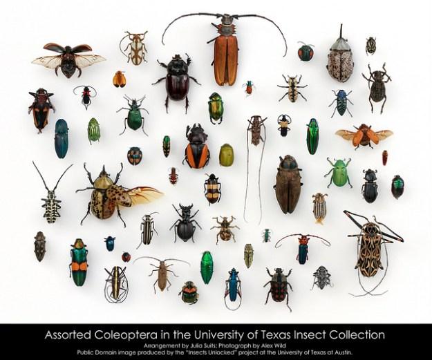 assorted-beetles