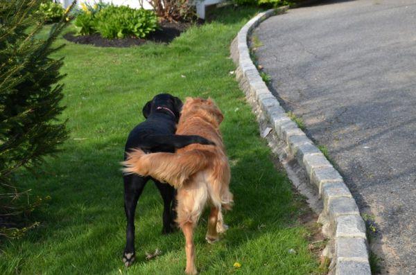 dog-friends-1368795305_b