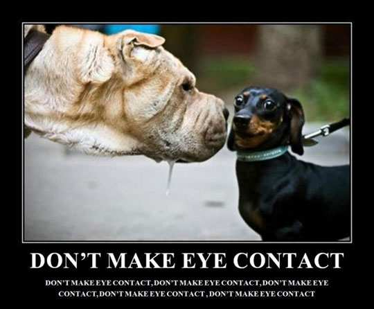 funny-scared-dog-eye-contact
