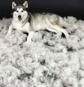 dog-shedding