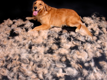 characteristics dog dogs types shedding non crested and hairless info sheds chinese breeds their