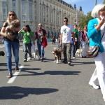 VII Quedada perros por Madrid
