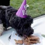 Cumpleaños de Bo