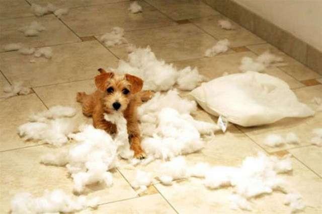dogs-mess-home-humor-17