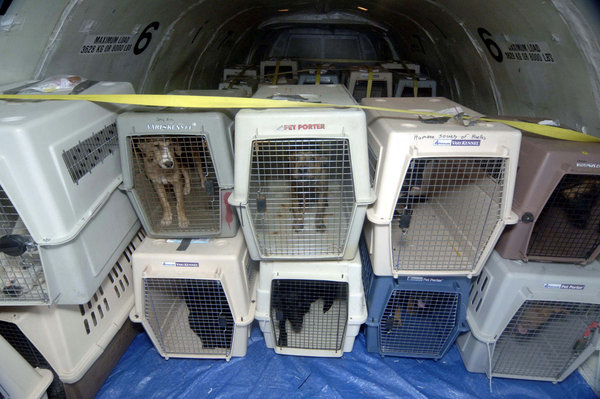 voyager avec un chien en avion