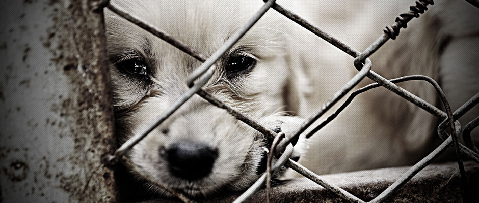 lonely-dog-in-cage1
