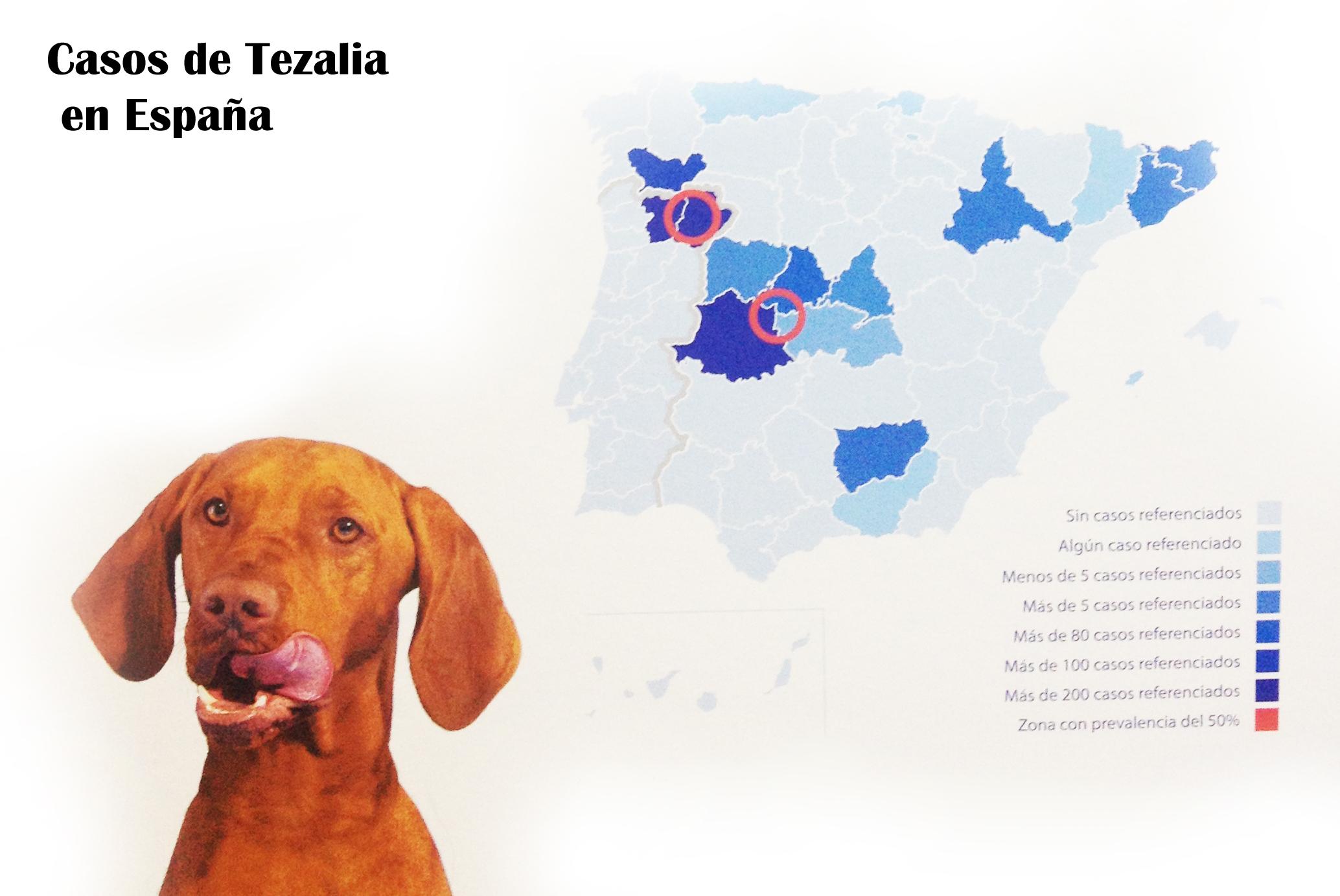 thezalia copia