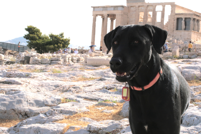 Dog in Athens