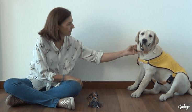 perro guía ONCE