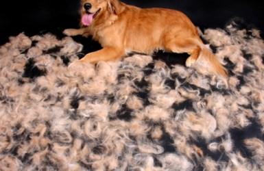 muda de pelos en perros