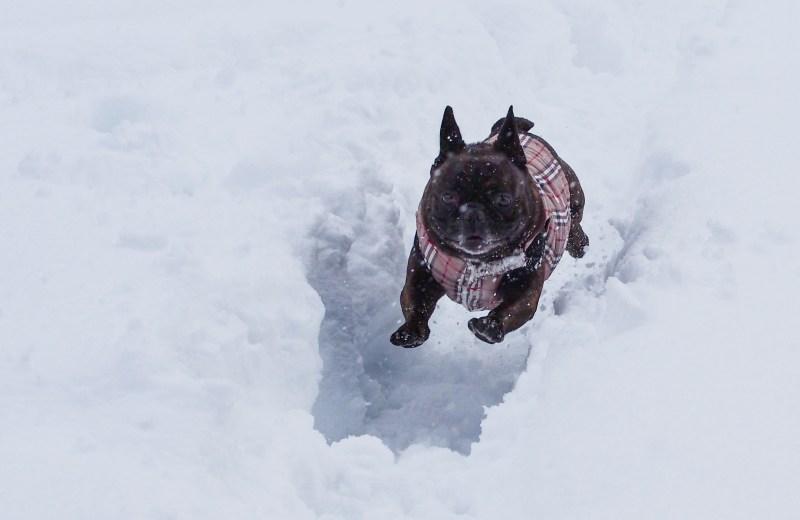 ir a esquiar con tu perro