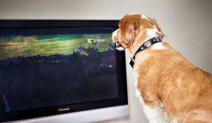 television perro ansiedad por separacion dogtv