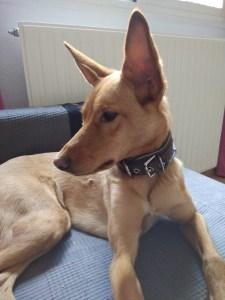 nombres de perro con p Pandereta
