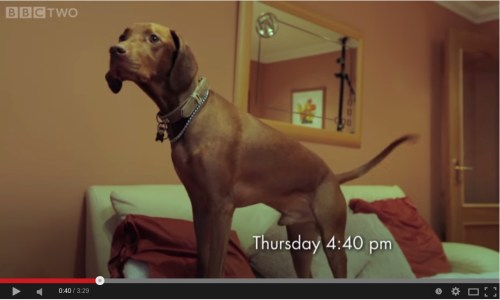 BBC can dogs tell the time