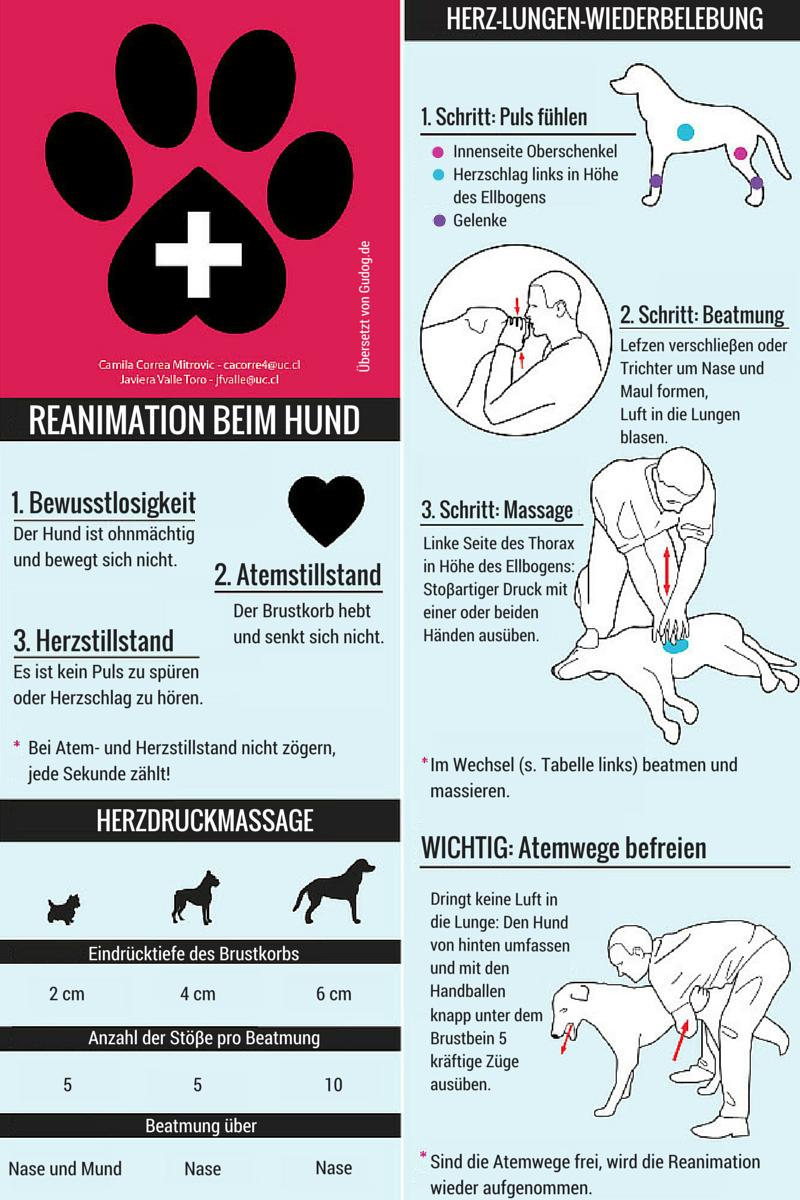 Erste Hilfe Am Hund Gublog