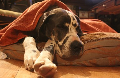 aider un chien à se dépenser