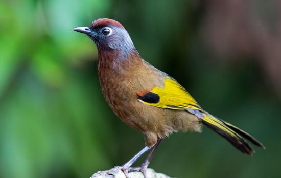 bird watching  uttarakhand, weekend getaway from delhi