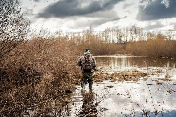 hunter man creeping in swamp during hunting period | rabbit hunting season