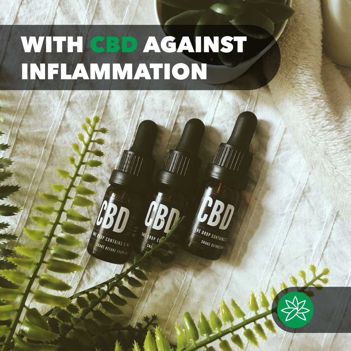 With CBD against inflammation