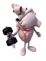 Human Heart Weight Training with dumbell in hand