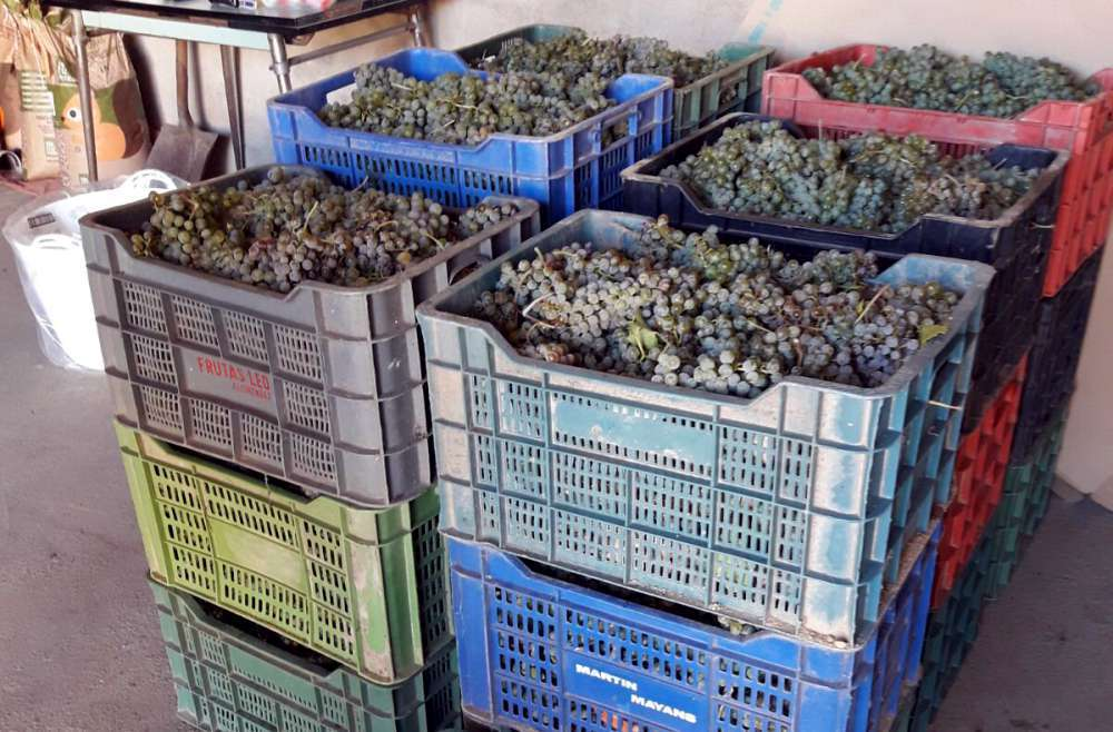 Caja de uva de la variedad Verdejo - Nieva - Segovia