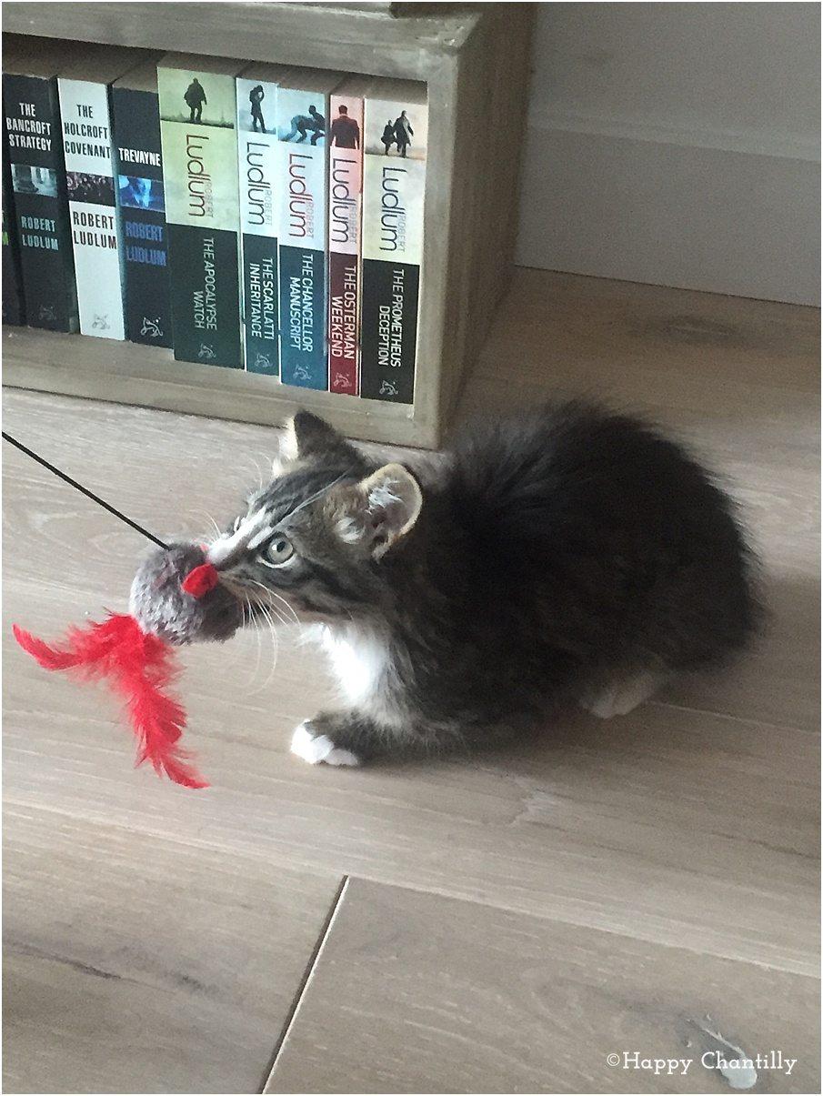 Jouer a tom le chat qui parle gratuit
