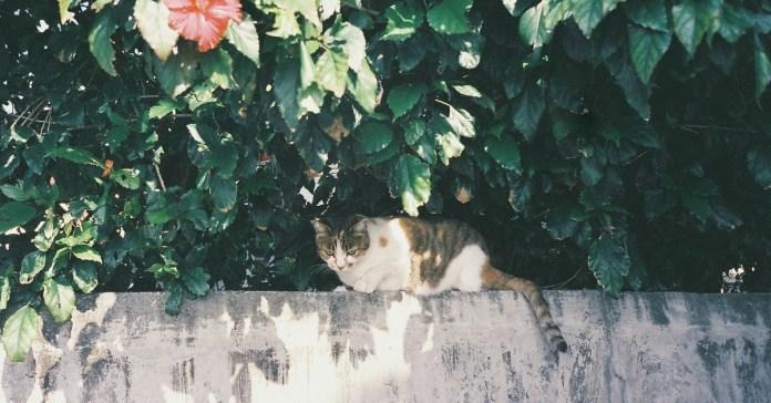 Cat lurking under a bush