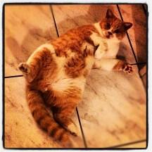 Crazy cat...