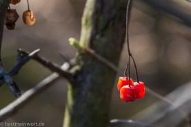 20140309 - Canon EOS 650D - IMG_2721