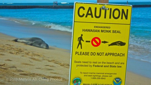 Keep Your Distance from the Seal