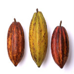 understanding cocoa
