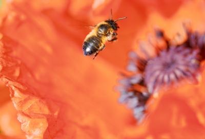 understanding bee hives