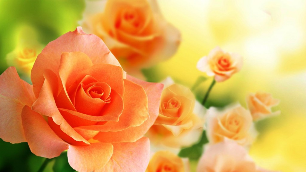March 2018 Cute Full Screen Desktop Wallpapers 15 Gorgeous Hd Roses Wallpapers