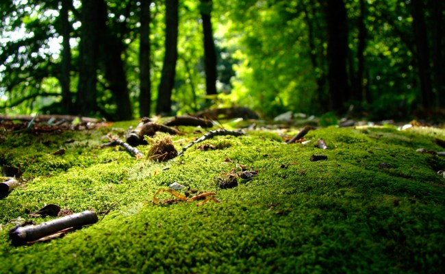 Nature Wallpapers Archives Hdwallsource
