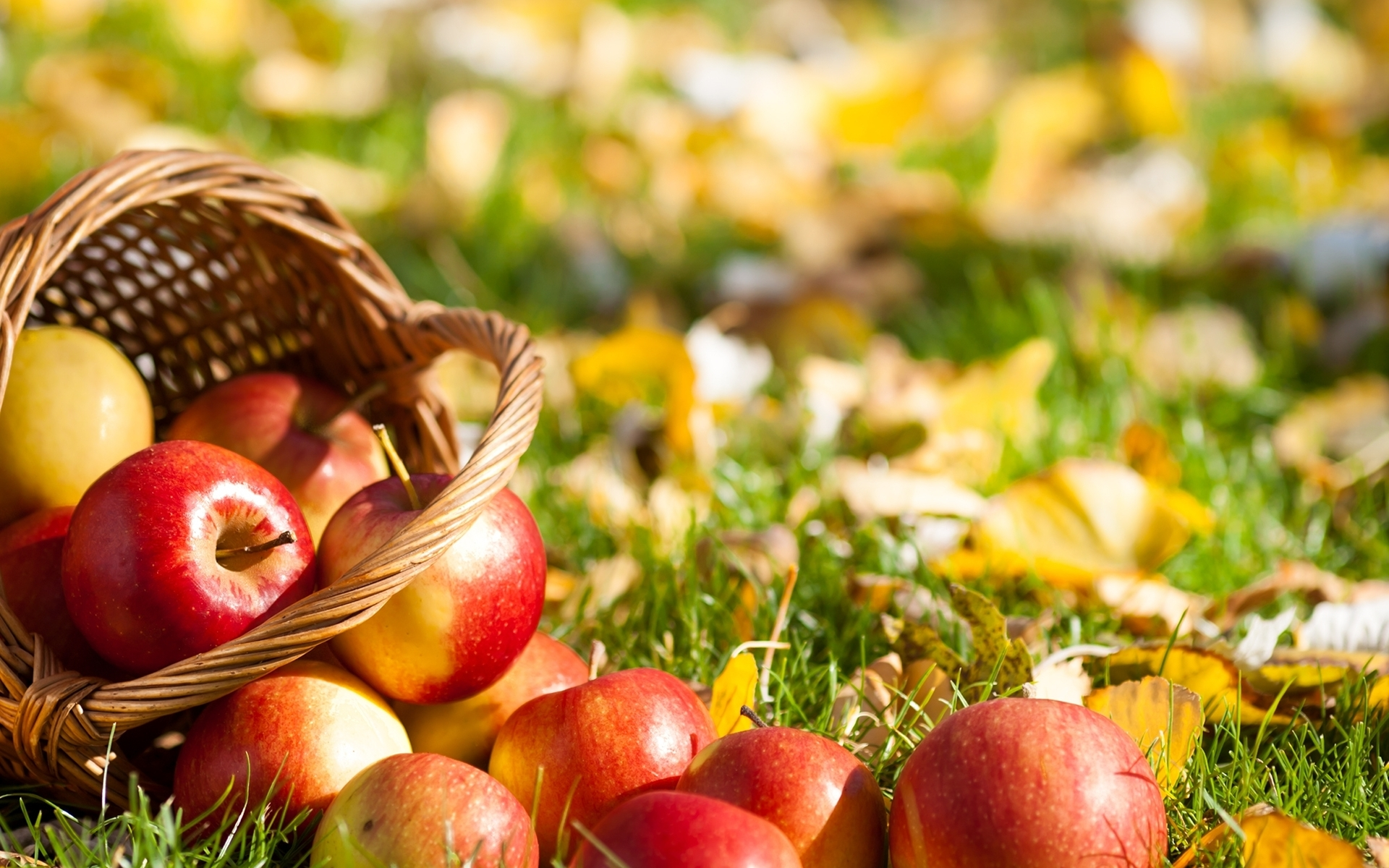 Fall Apples Wallpaper Food Wallpapers Archives Hdwallsource Com