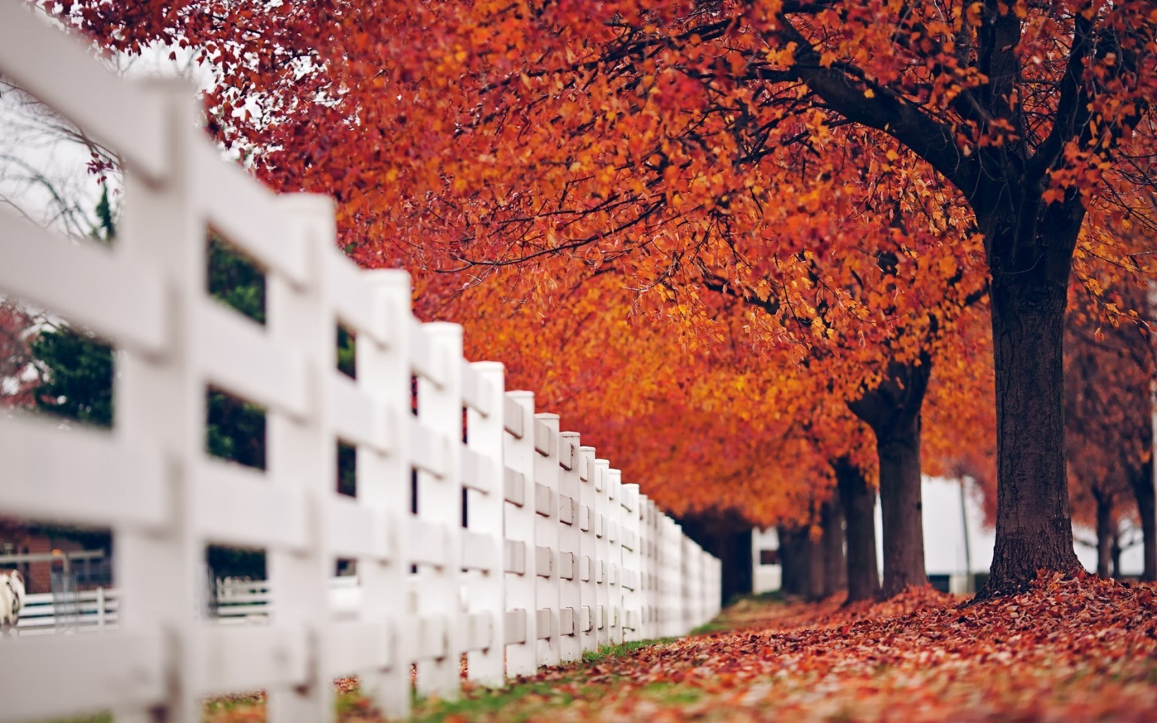 Fall Leaves Hd Desktop Wallpaper 20 Stunning Hd Fence Wallpapers