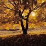 Oak Tree Wallpapers Archives Hdwallsource