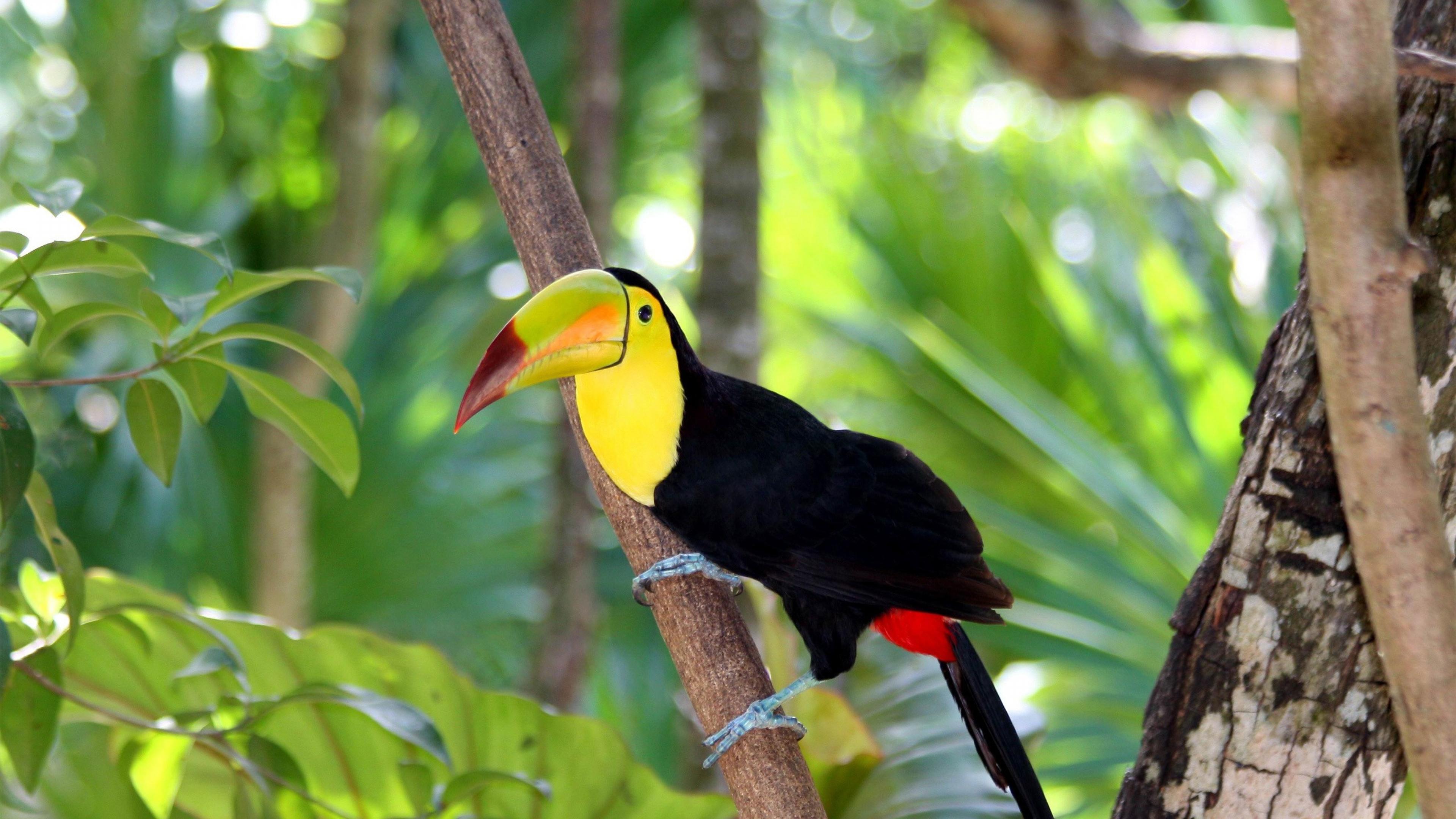 Bird Of Paradise Hd Wallpaper 17 Hd Toucan Bird Wallpapers Hdwallsource Com