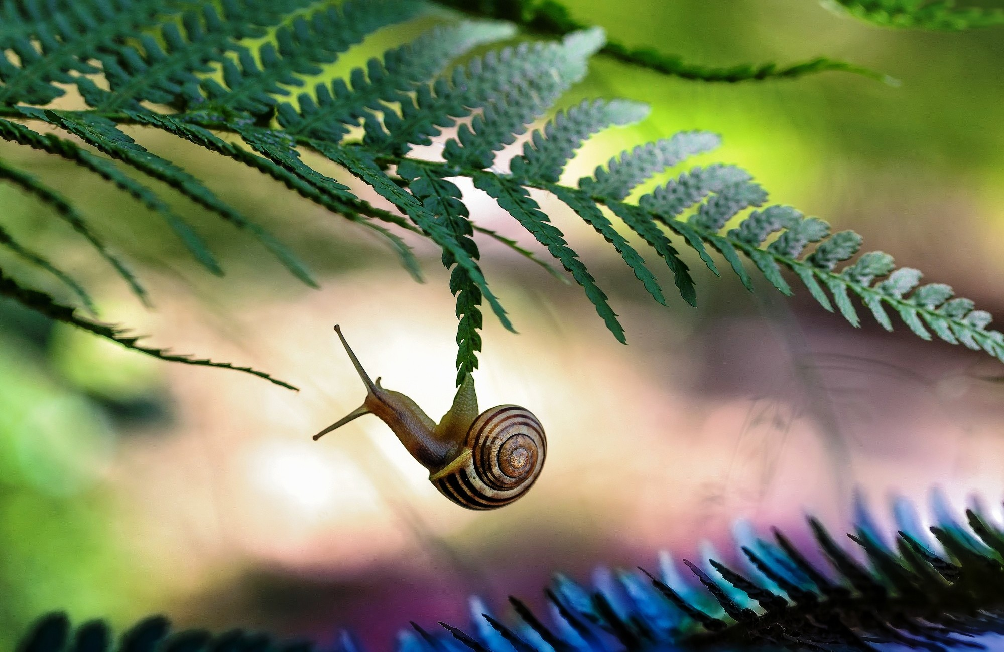Cute Wallpapers For March 36 Excellent Hd Snail Wallpapers