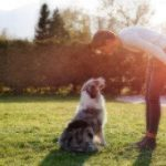 Dog Facts Australian Shepherds Healthy Paws