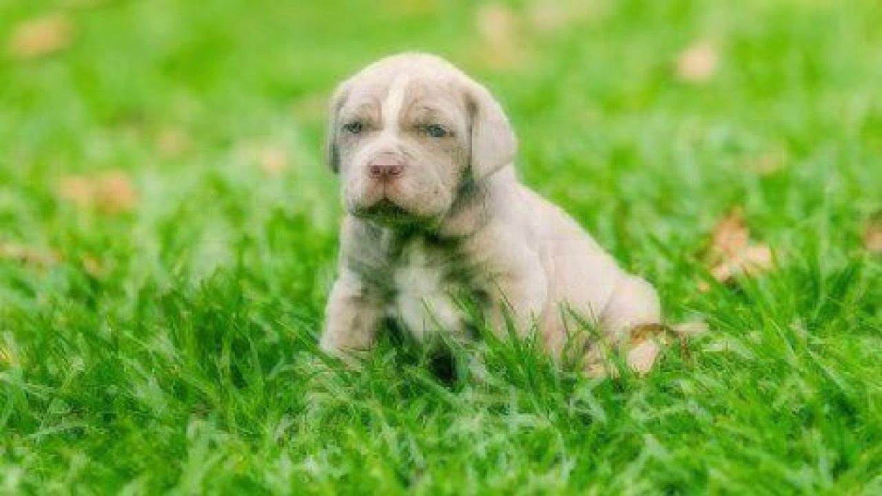 will my puppy have