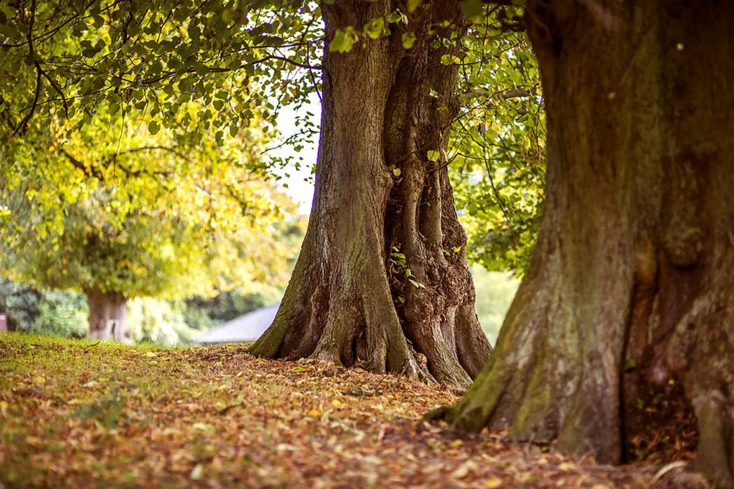 a1876990e41383 Hello herfst! 4 tips om van de herfst te genieten