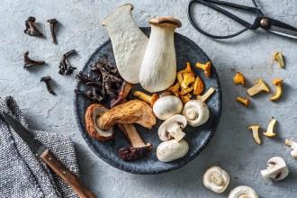 Essbare Pilze – die Highlights für Deine Küche im Herbst