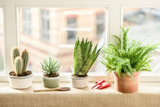 The Best House Plants for Busy People