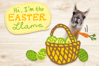 WIN a box with the Easter Llama