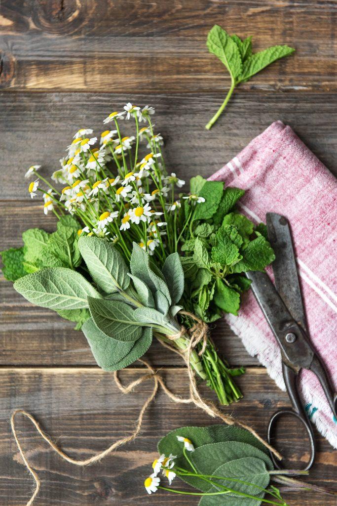 7 gesunde Teesorten: Kräuterbündel
