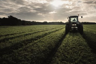 The UK Carrot 'Crisis': What does this mean for our carrots?