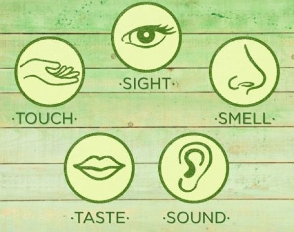 Taste-Training-Picky Eaters-HelloFresh-Kids-Rainbow-Senses-Sight-Touch-Taste-Sound-Smell