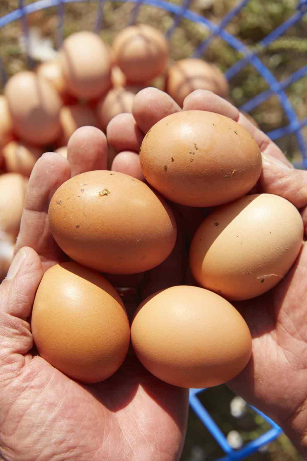 free range eggs-HelloFresh-farmer-happy-egg-co
