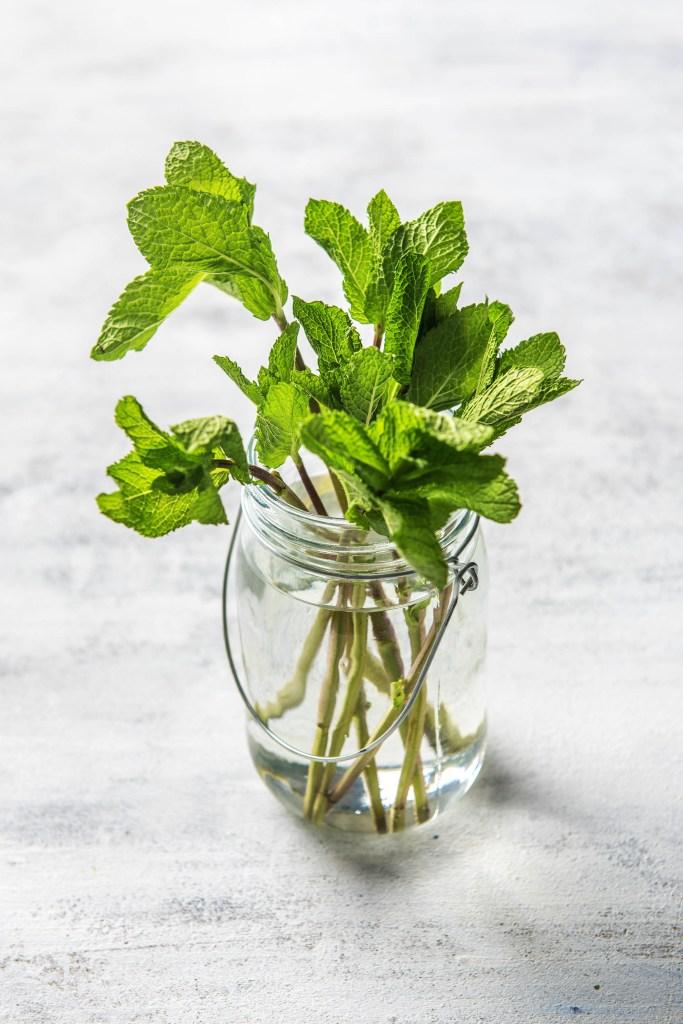 repurpose-fresh herbs-HelloFresh-replant-herbs